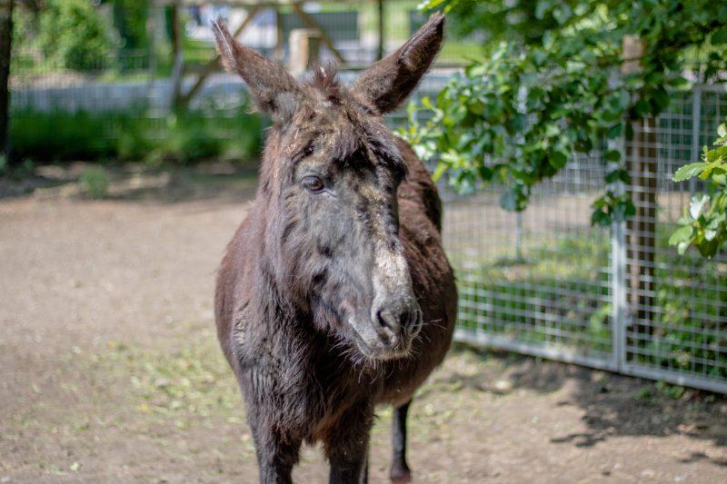 Bild von einem Esel