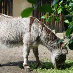 Bild von Esel